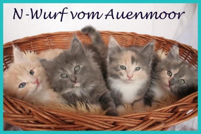Katzen Zuechter Kleinanzeigen Katzen Zuechter Annoncen Katzen Zuechter Inserate Katzen Zuechter Anzeigenmarkt Katzen Zuechter Marktplatz