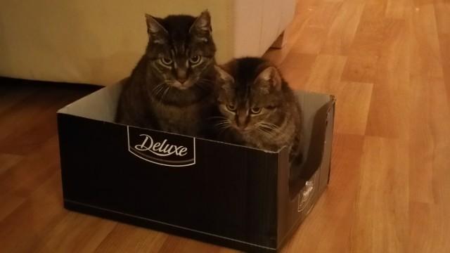 Katzen Trennen